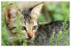 Katzenaufmerksamkeit