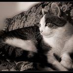 Katzenauge sei wachsam