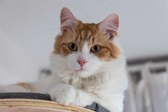 * Katzenaugen *