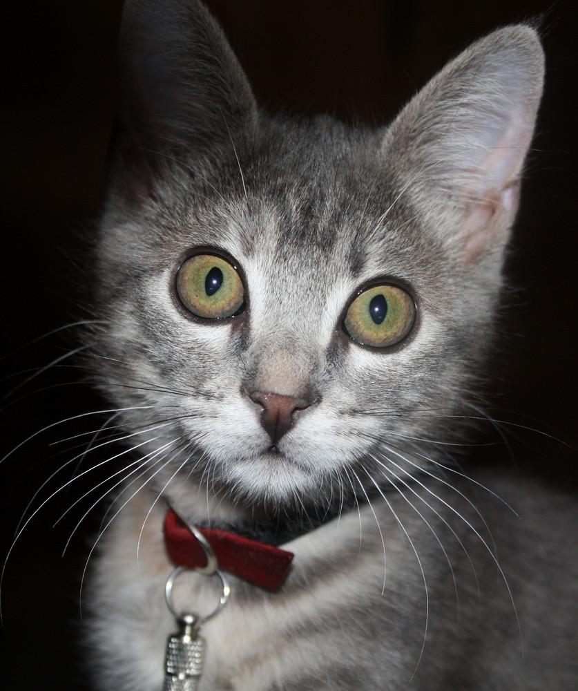 Katzenaugen (Orginalaufnahme)