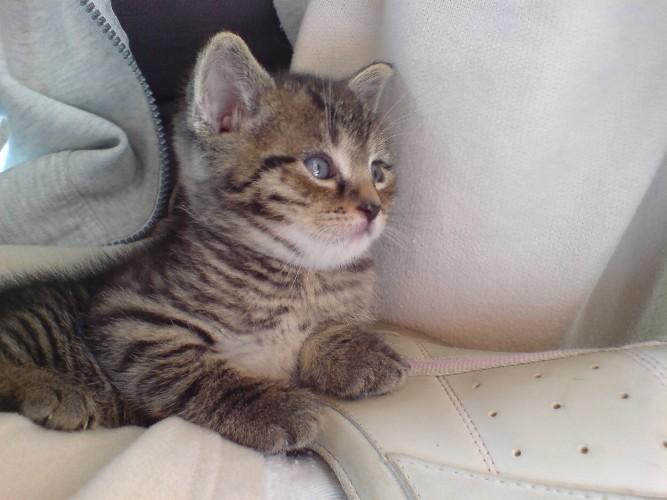 Katzenbabie