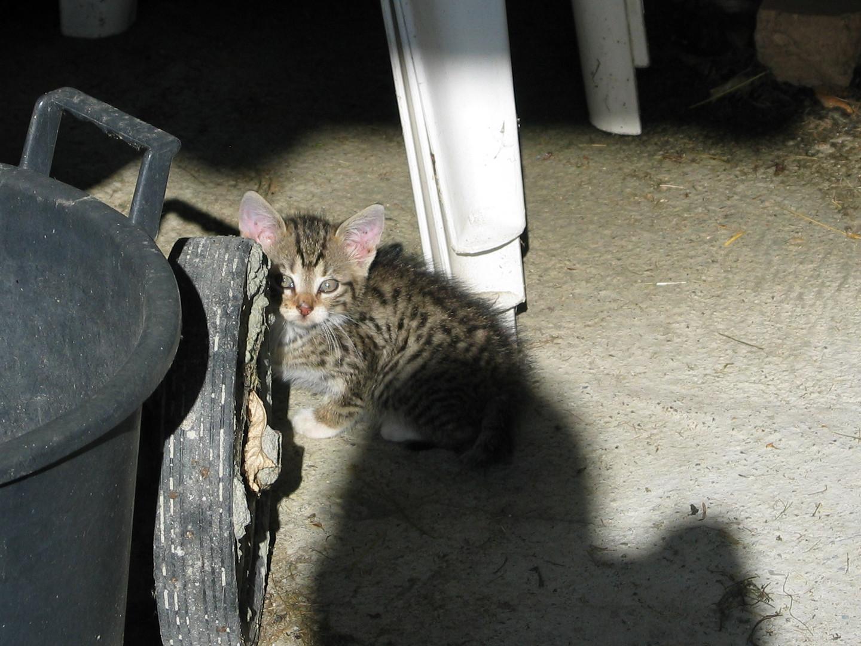 Katzenbabies bei Jo im Spreewald