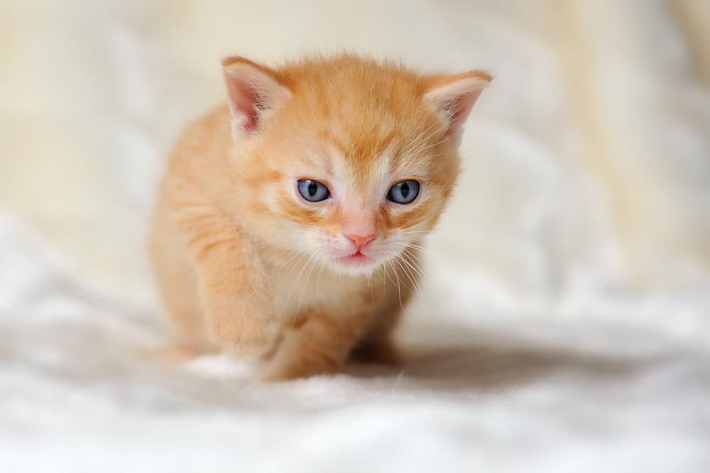 Katzenbaby Foto & Bild | tiere, haustiere, katzen Bilder ...