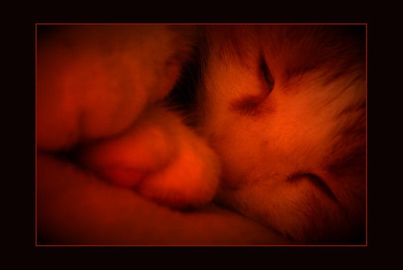 Katzenbaby im Mutterleib ...