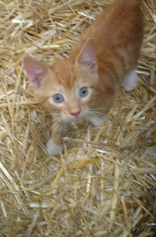 Katzenbaby Nr. 2
