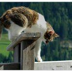 Katzenbalance