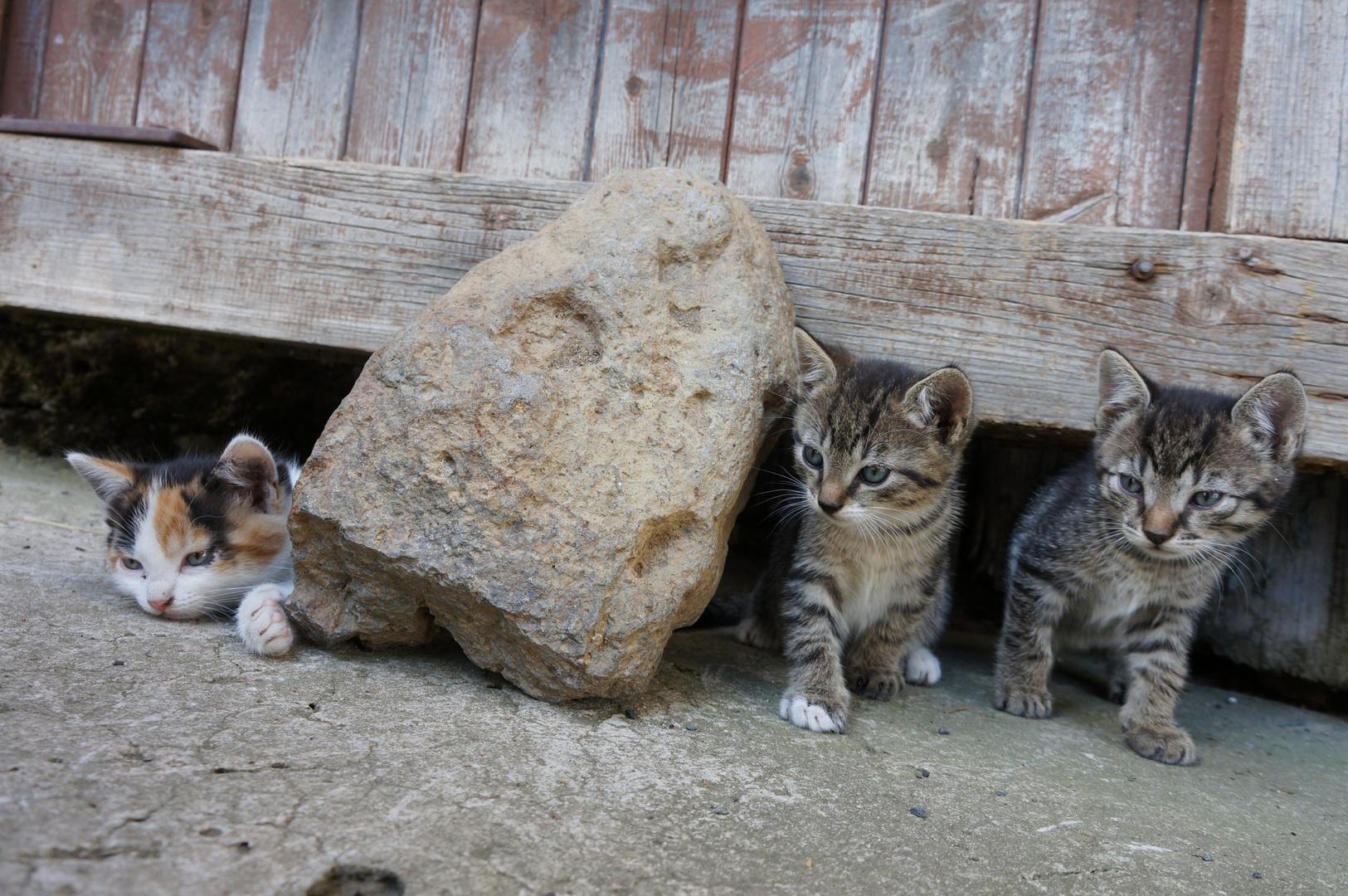 Katzenbande Heimertshausen