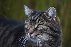 Katzenbekanntschaft