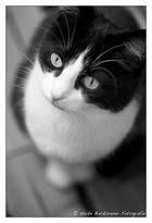 Katzenblicke
