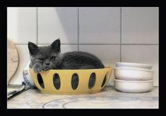 KatzenBrot