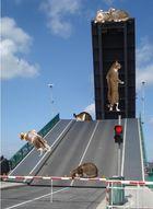 Katzenbrücke