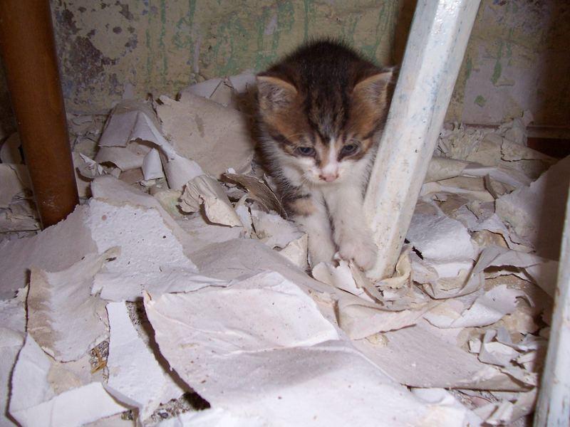 Katzendreck