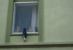 Katzenfensterbank