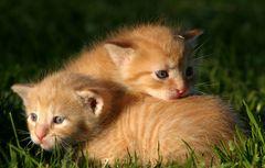 Katzenhaufen