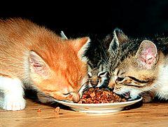 Katzenhunger