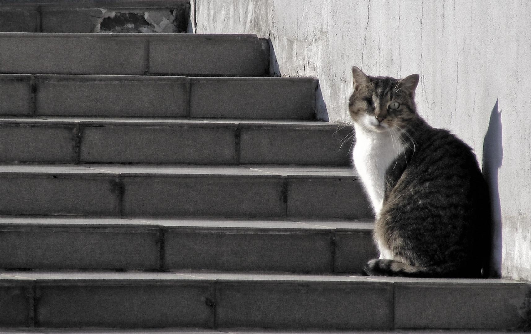Katzenjammer (Broken Cat)