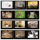 Katzenkalender 2012
