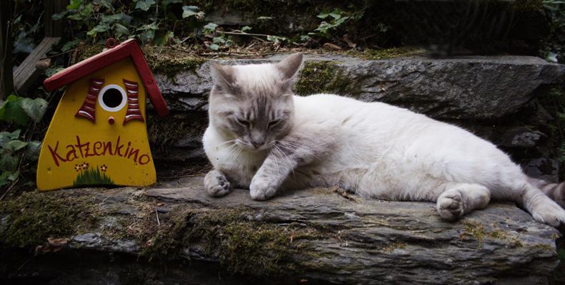 Katzenkino