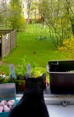 Katzenkino am Morgen