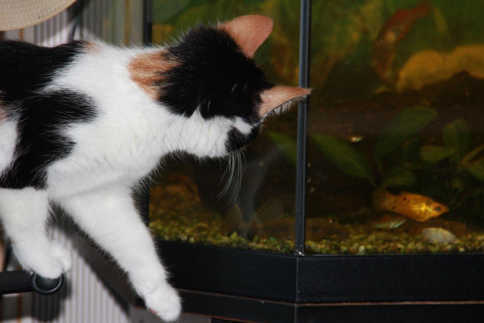 Katzenkino!!!