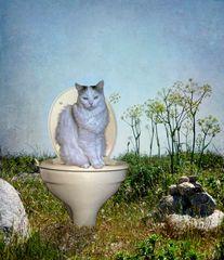 Katze(n)klo, macht die Katze froh...?