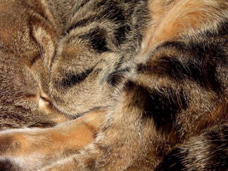 Katzenknäuel