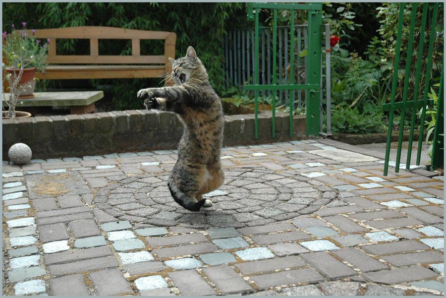 Katzenkugelstoßen