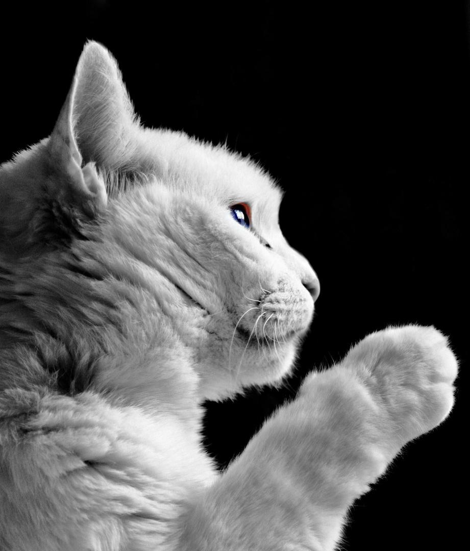 Katzenlady