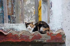 Katzenleben in Kuba