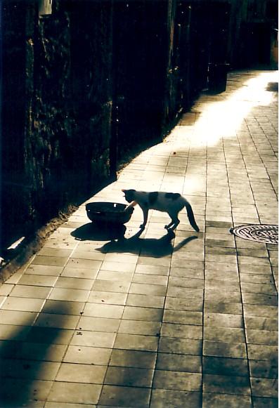 Katzenleben in Pizzo, Kalabrien