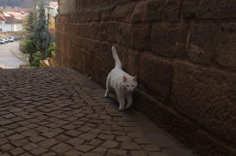 ***Katzenmauer***