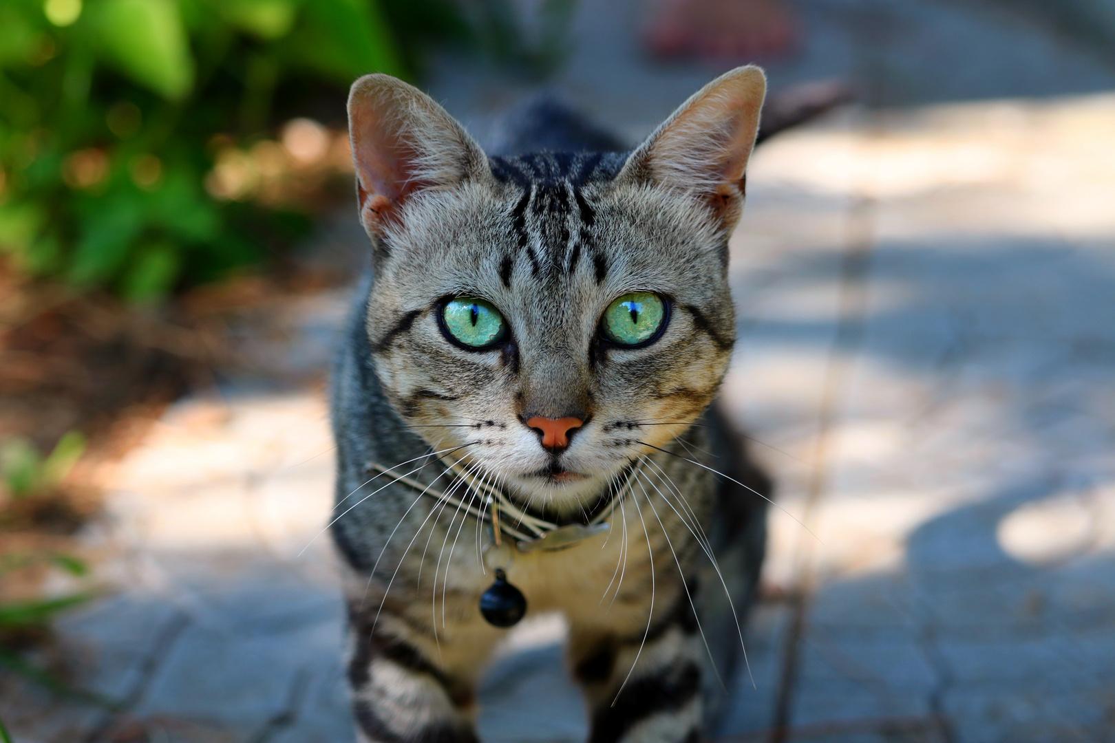 Katzenmeer