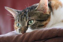 Katzenmodell