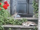 Katzenmutter aus Kalabrien