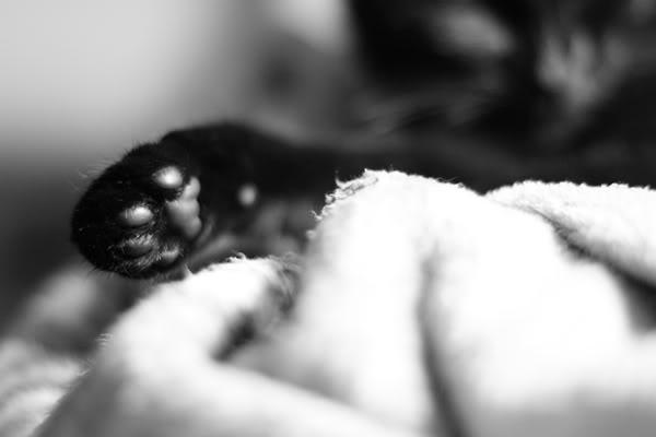 Katzenpfötchen