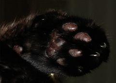 Katzenpfötchen,