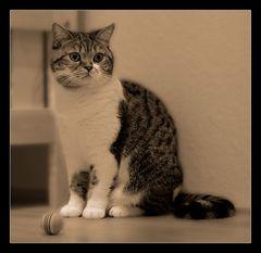 Katzenportriat