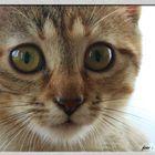 Katzenpotrait