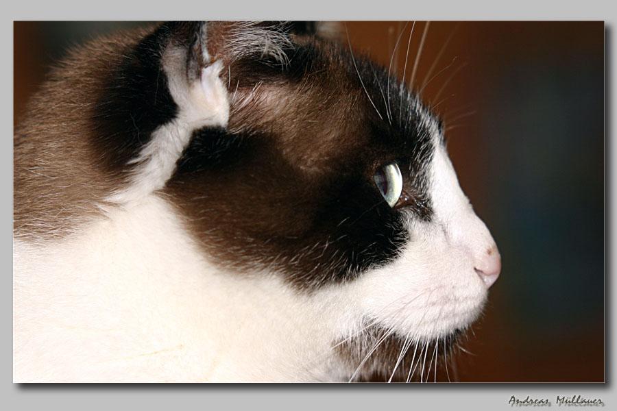 ** Katzenprofil **