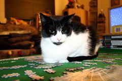 Katzenpuzzle :D
