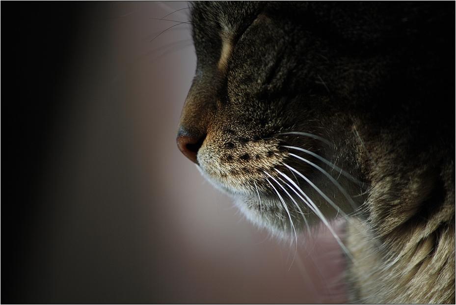 Katzenruhe...
