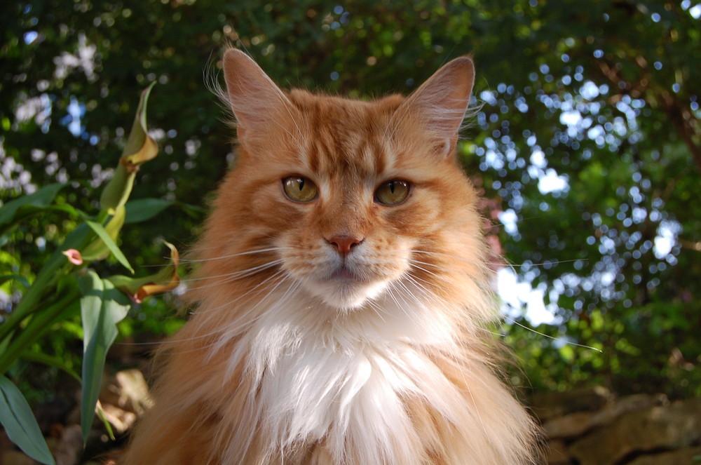 Katzenschönheit
