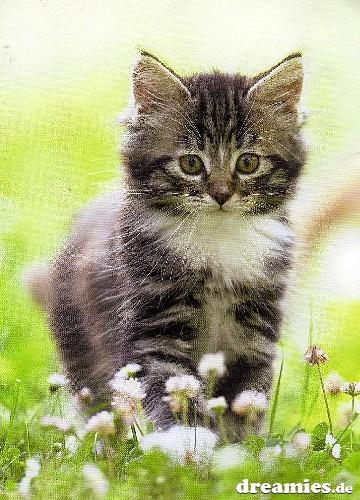 Katzenspaziergang