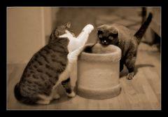 Katzenspiel I