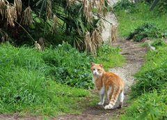 Katzensteig