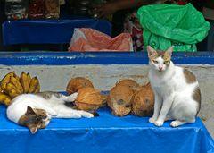 Katzenstillleben