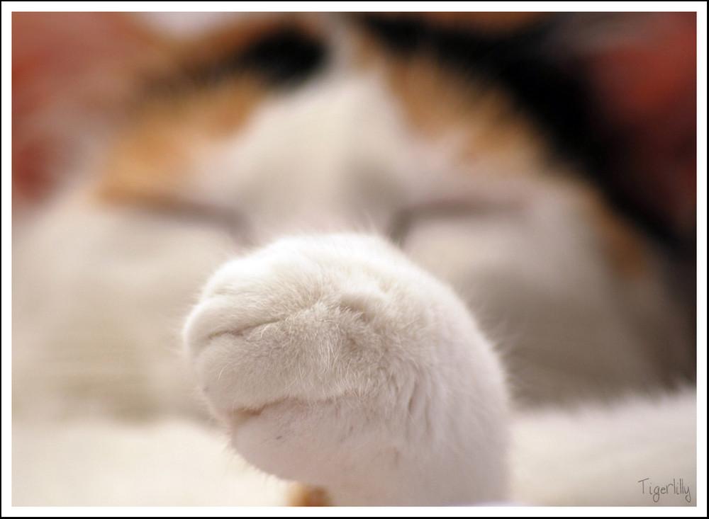 Katzentatze