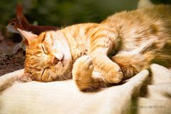 -- Katzenträume --