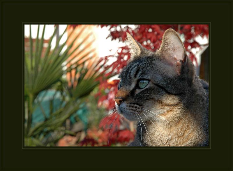Katzenurlaub
