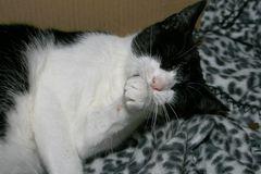 Katzenwäsche Serie #1